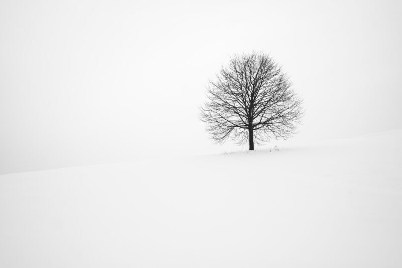 Leafless tree on a snow covered land