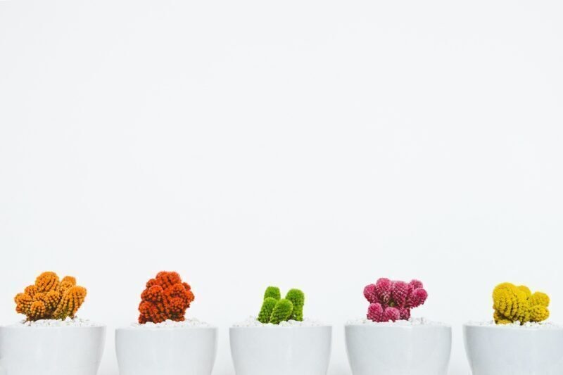 Assorted colored cactus plants